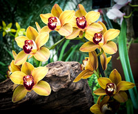 Orchid Display 18-22