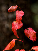 Suspended Leaves