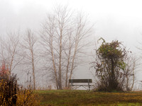 Bench and Fog