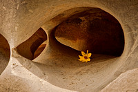 Cave Flower 2