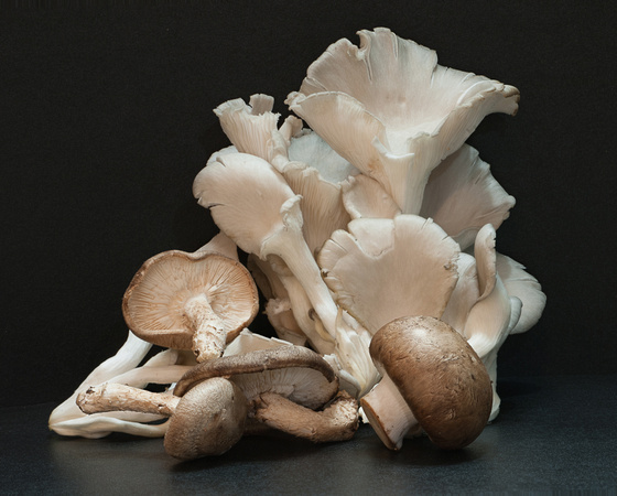 Mushrooms 51-52